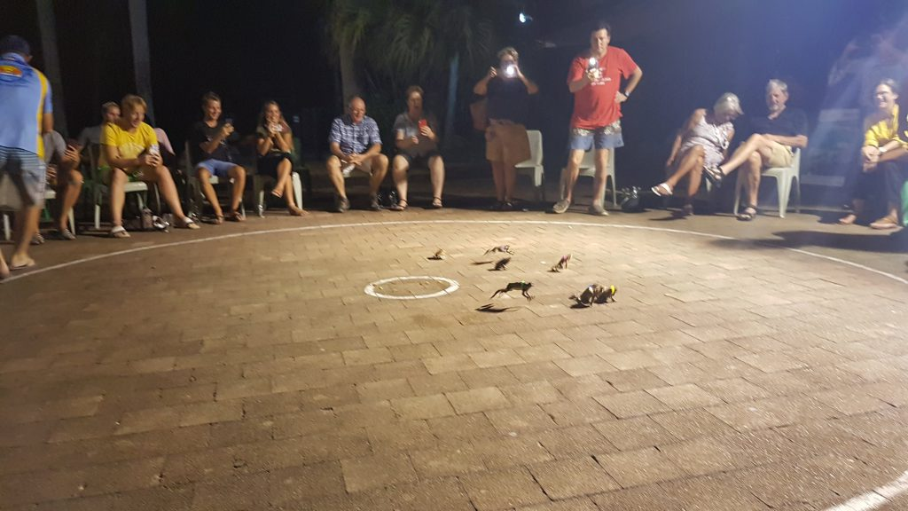 Toad Racing